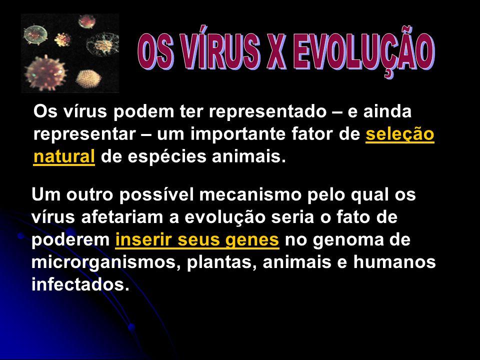 OS VÍRUS X EVOLUÇÃO Os vírus podem ter representado – e ainda representar – um importante fator de seleção natural de espécies animais.