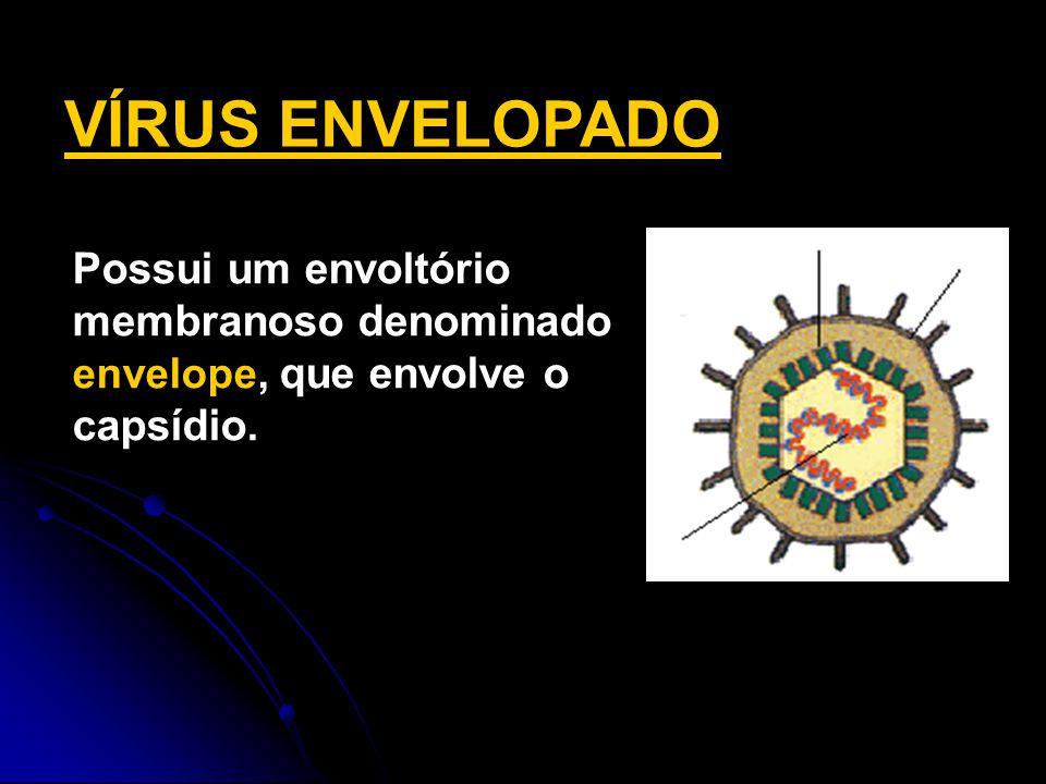 VÍRUS ENVELOPADO capsídeo. Possui um envoltório membranoso denominado envelope, que envolve o capsídio.
