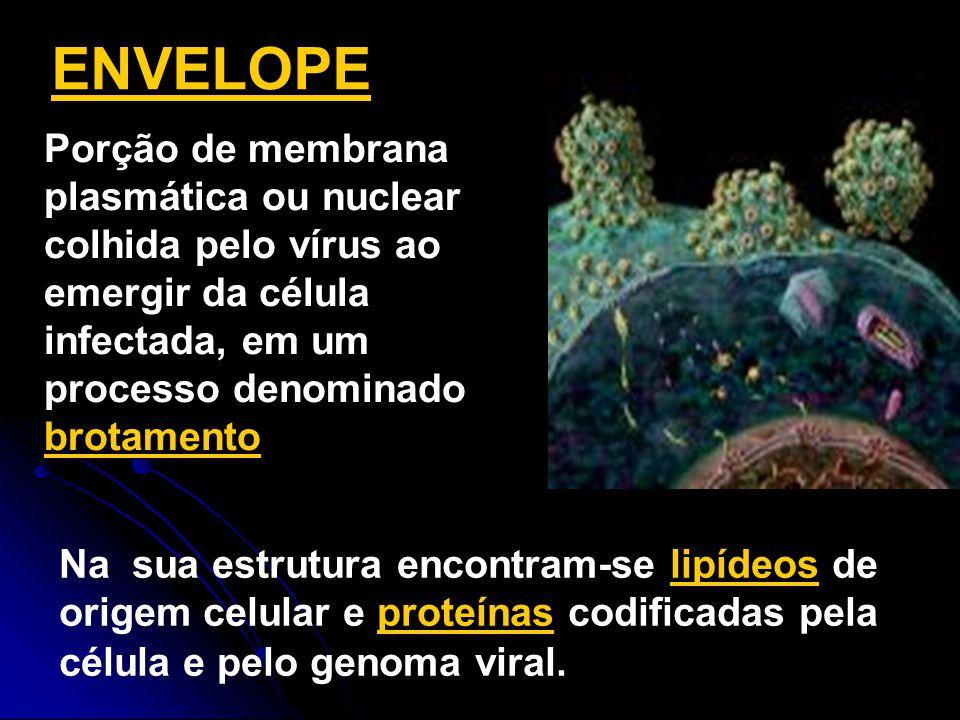 ENVELOPE Porção de membrana plasmática ou nuclear colhida pelo vírus ao emergir da célula infectada, em um processo denominado brotamento.