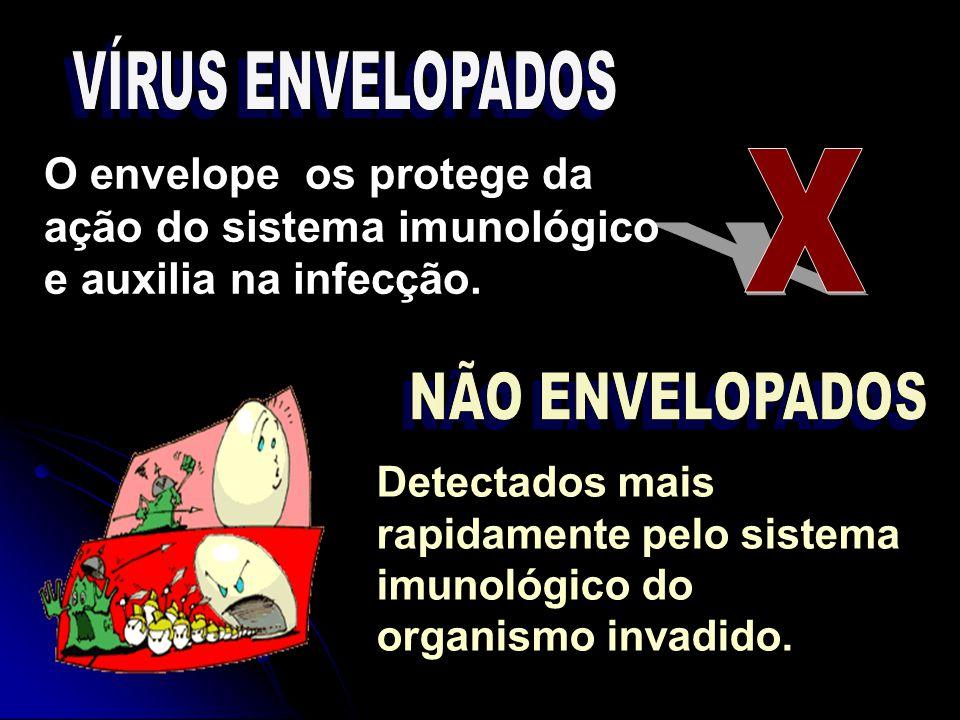 VÍRUS ENVELOPADOS O envelope os protege da ação do sistema imunológico e auxilia na infecção. X. NÃO ENVELOPADOS.