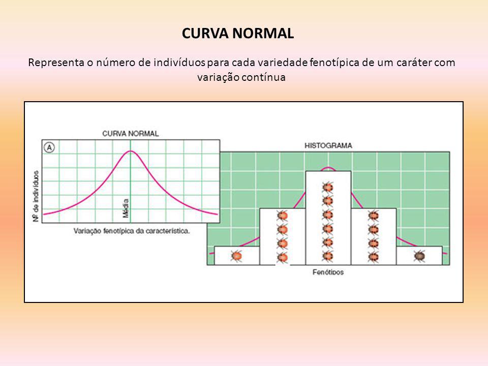 CURVA NORMAL Representa o número de indivíduos para cada variedade fenotípica de um caráter com variação contínua.
