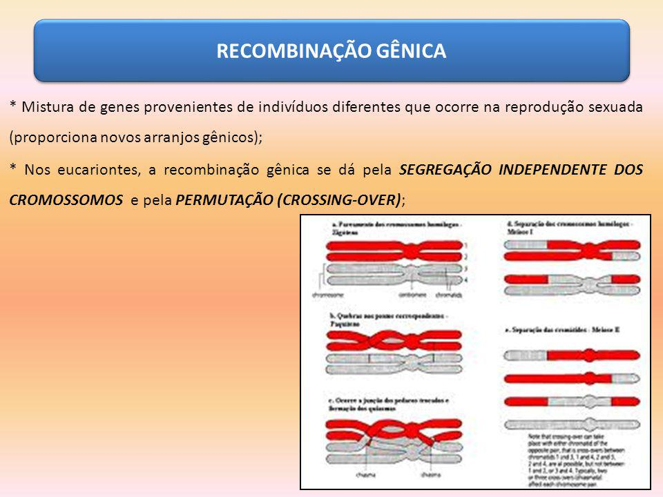 RECOMBINAÇÃO GÊNICA * Mistura de genes provenientes de indivíduos diferentes que ocorre na reprodução sexuada (proporciona novos arranjos gênicos);
