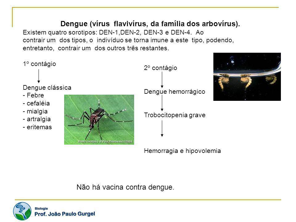Dengue (vírus flavivírus, da família dos arbovírus).