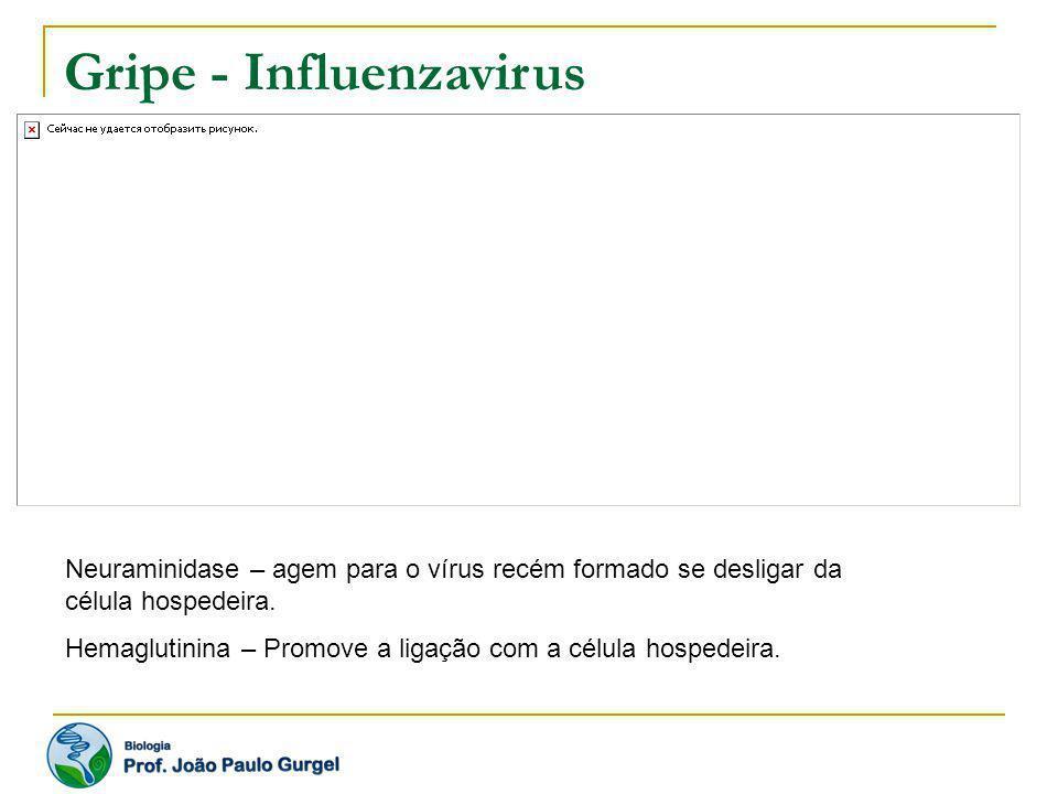 Gripe - Influenzavirus