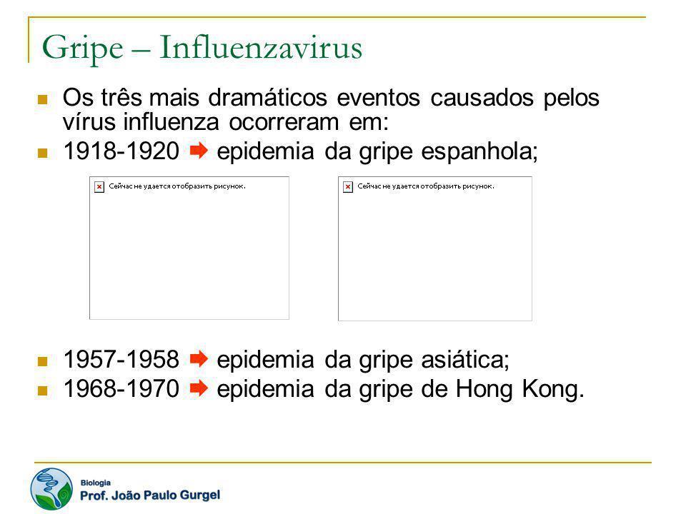 Gripe – Influenzavirus