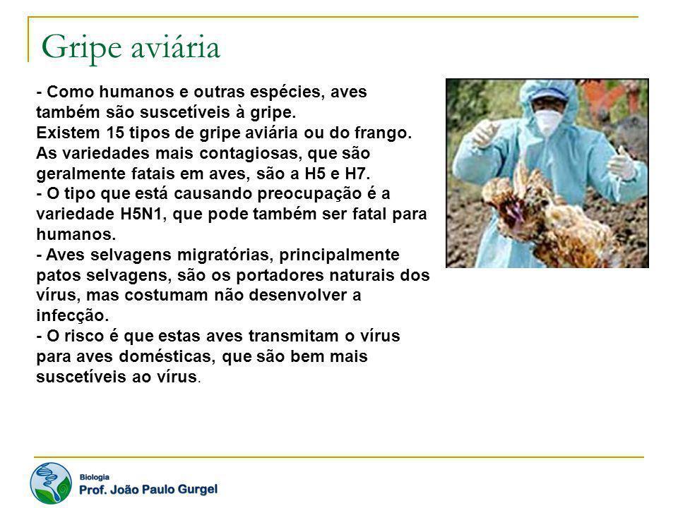 Gripe aviária - Como humanos e outras espécies, aves também são suscetíveis à gripe.