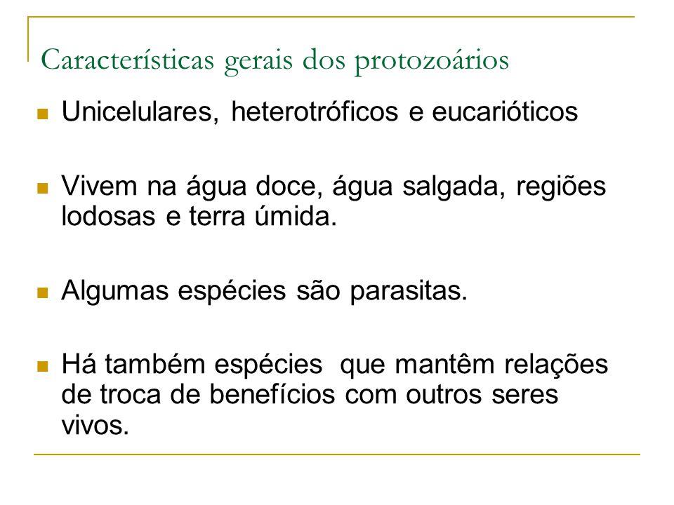 Características gerais dos protozoários