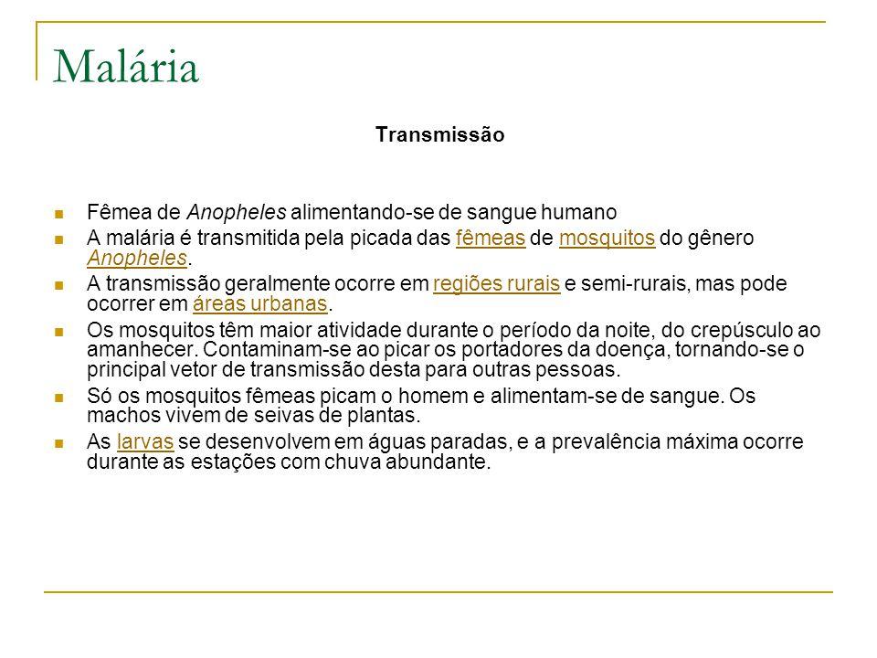 Malária Transmissão Fêmea de Anopheles alimentando-se de sangue humano