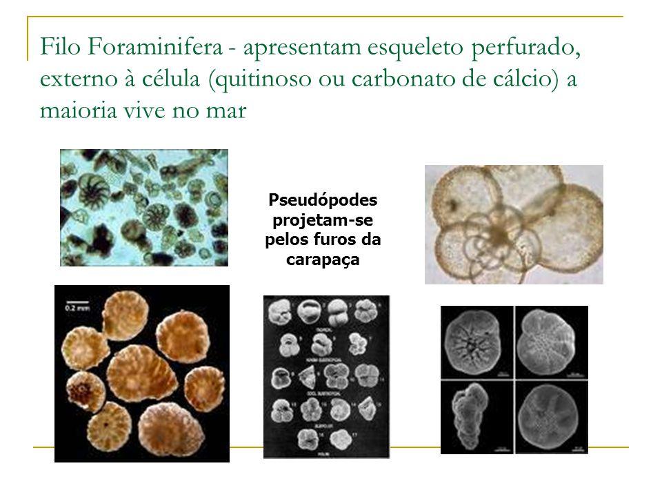 Pseudópodes projetam-se pelos furos da carapaça