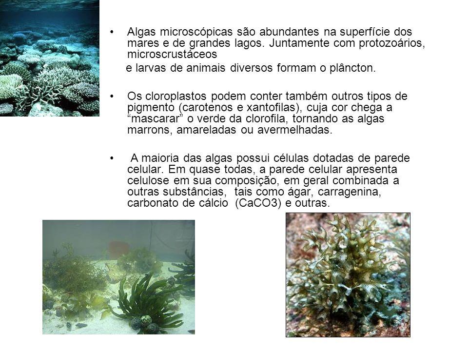 Algas microscópicas são abundantes na superfície dos mares e de grandes lagos. Juntamente com protozoários, microscrustáceos