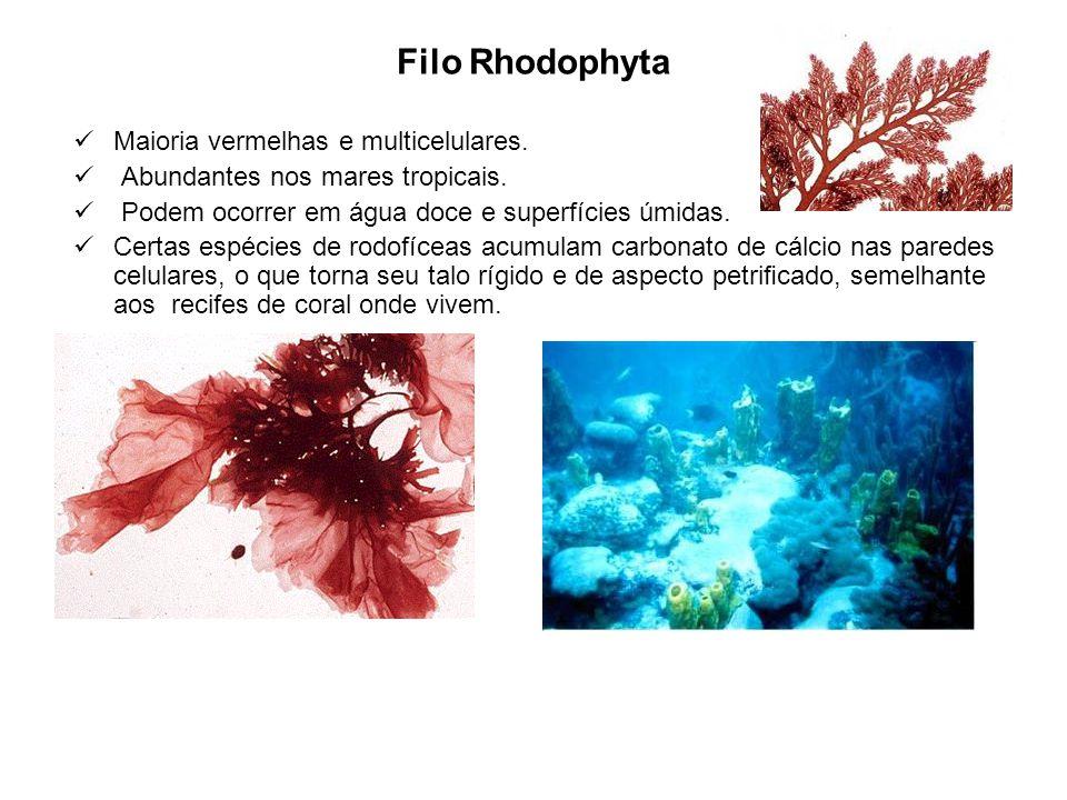 Filo Rhodophyta Maioria vermelhas e multicelulares.