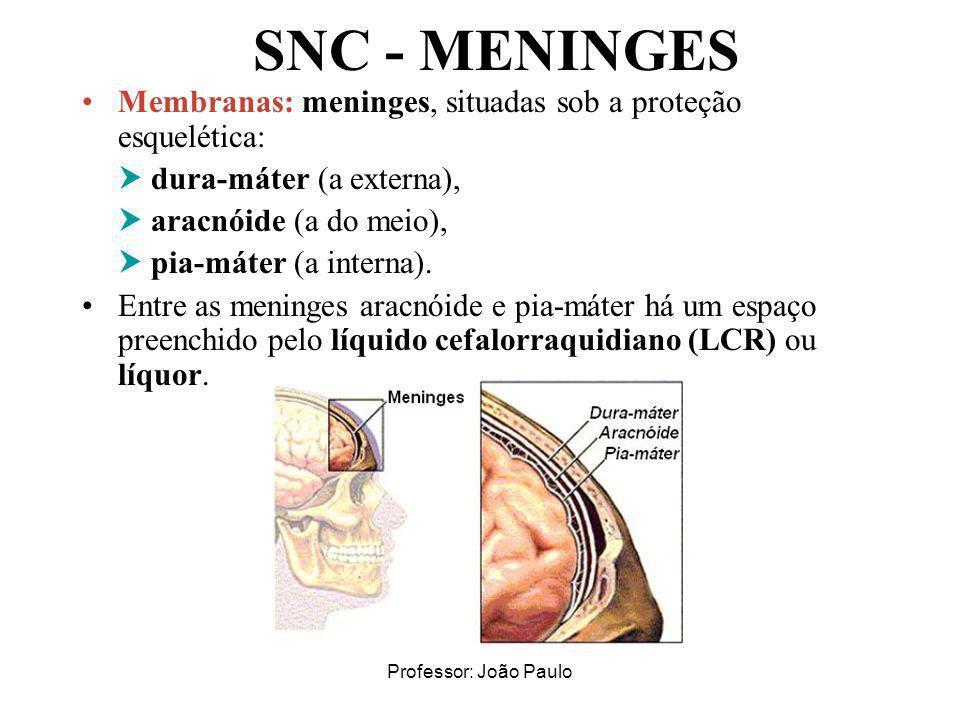 SNC - MENINGES Membranas: meninges, situadas sob a proteção esquelética:  dura-máter (a externa),