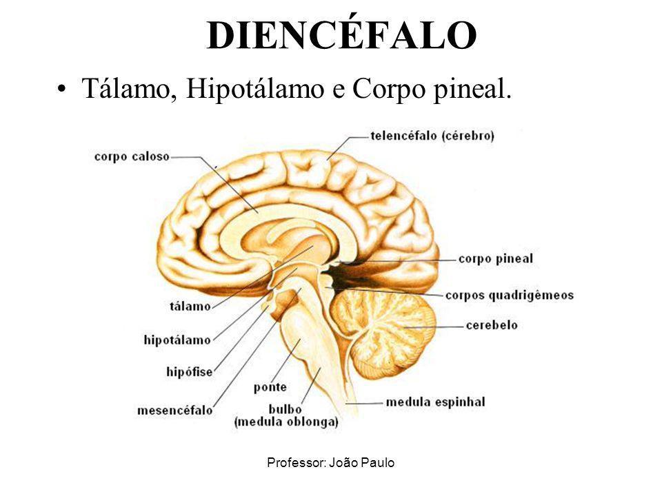 DIENCÉFALO Tálamo, Hipotálamo e Corpo pineal. Professor: João Paulo