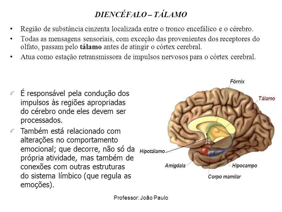 DIENCÉFALO – TÁLAMO Região de substância cinzenta localizada entre o tronco encefálico e o cérebro.
