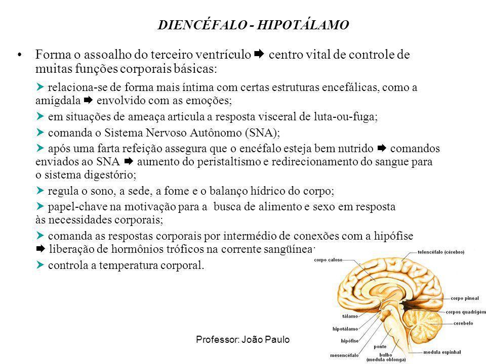 DIENCÉFALO - HIPOTÁLAMO