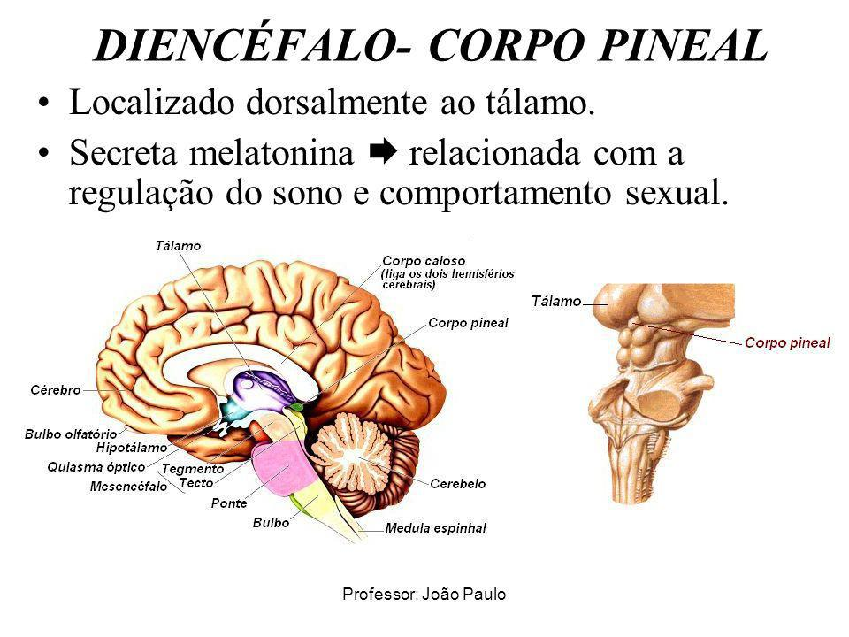 DIENCÉFALO- CORPO PINEAL