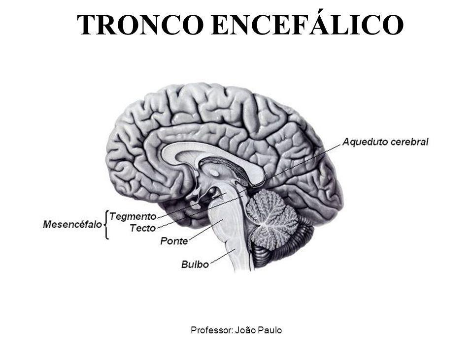 TRONCO ENCEFÁLICO Professor: João Paulo