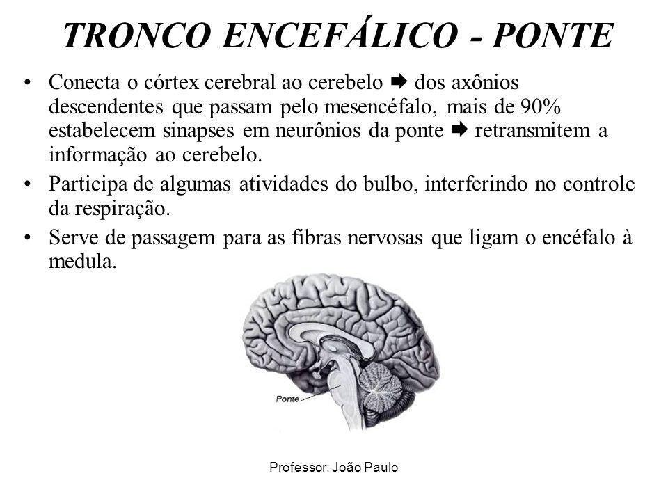 TRONCO ENCEFÁLICO - PONTE