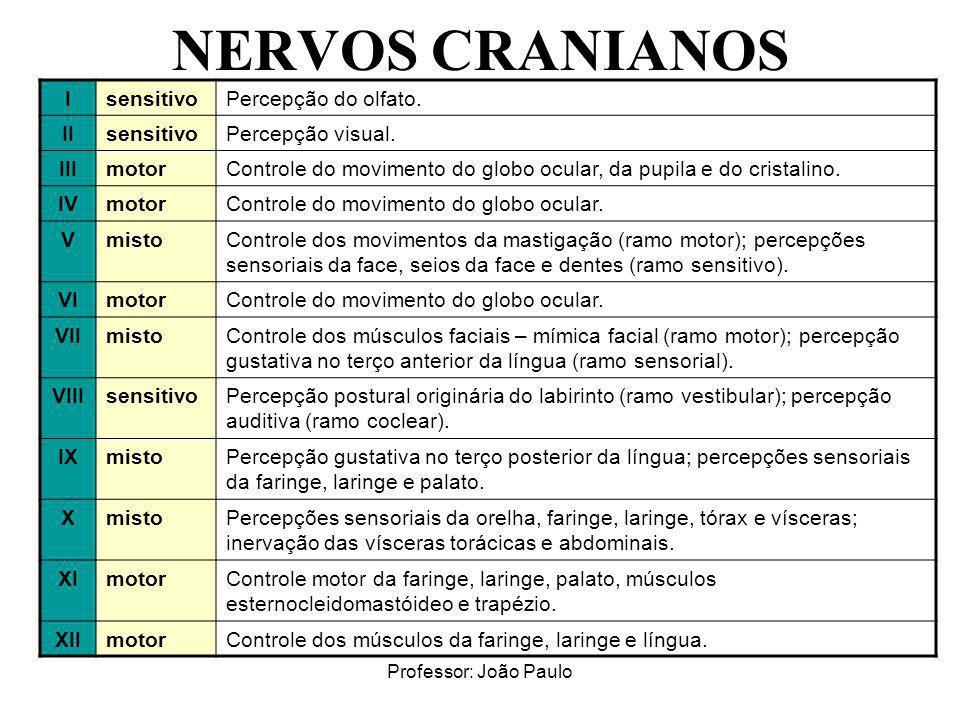 NERVOS CRANIANOS I sensitivo Percepção do olfato. II Percepção visual.