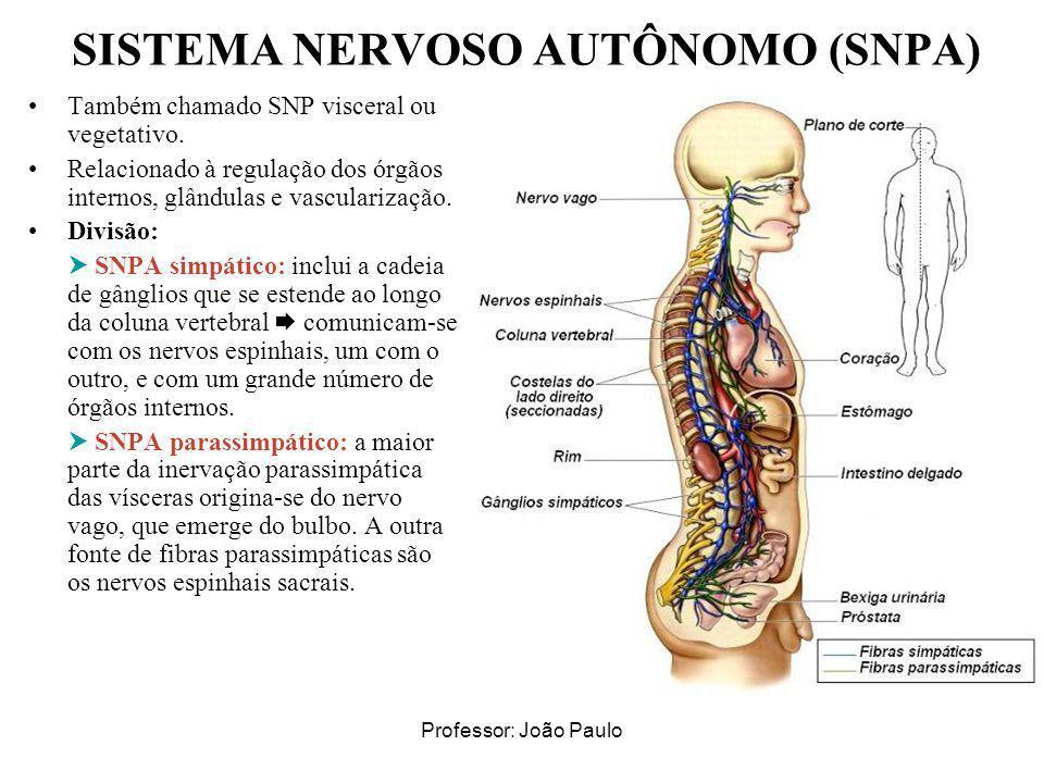SISTEMA NERVOSO AUTÔNOMO (SNPA)