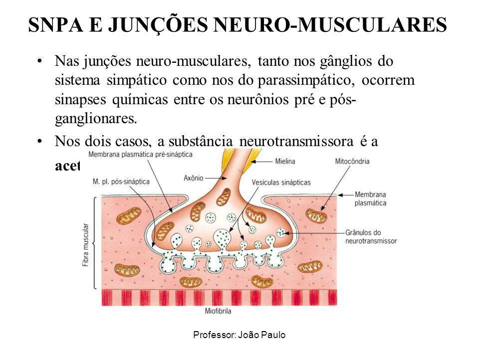SNPA E JUNÇÕES NEURO-MUSCULARES