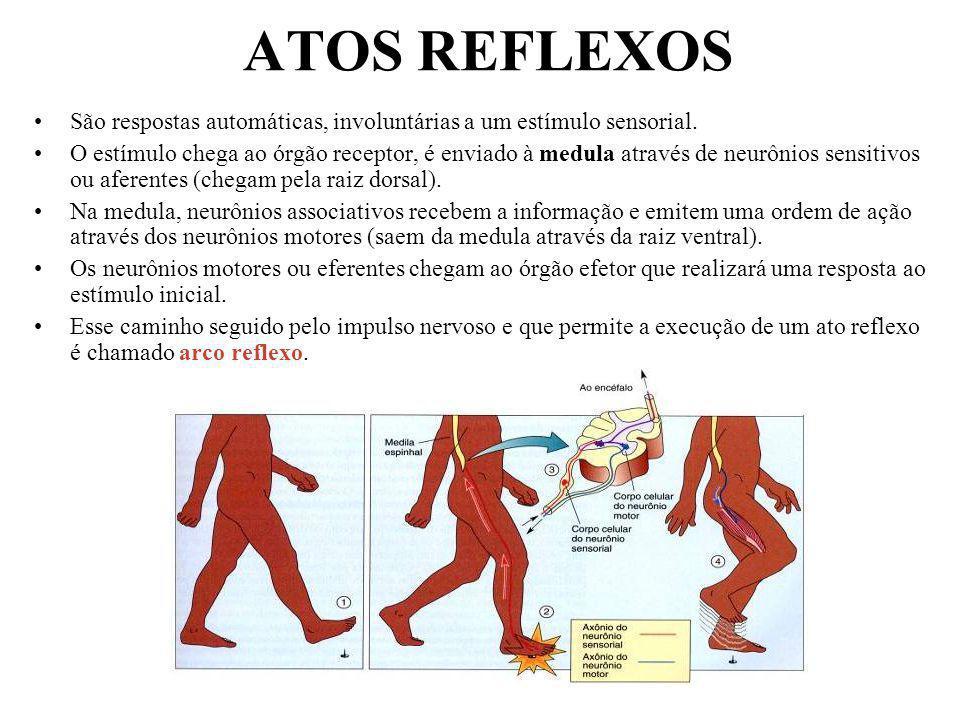 ATOS REFLEXOS São respostas automáticas, involuntárias a um estímulo sensorial.