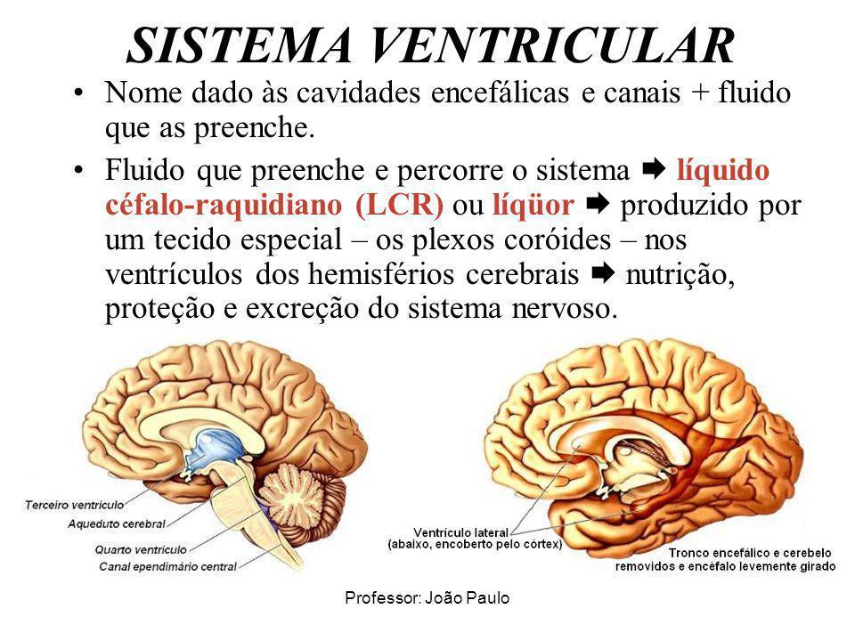 SISTEMA VENTRICULAR Nome dado às cavidades encefálicas e canais + fluido que as preenche.