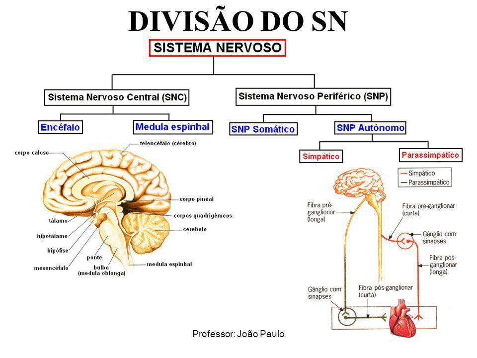 DIVISÃO DO SN Professor: João Paulo