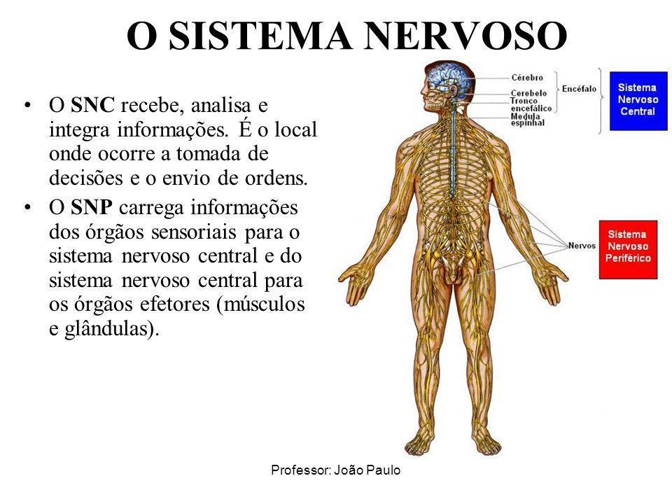 O SISTEMA NERVOSO O SNC recebe, analisa e integra informações. É o local onde ocorre a tomada de decisões e o envio de ordens.