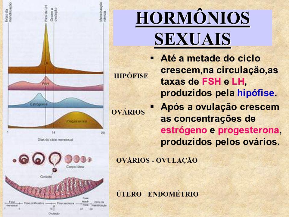 HORMÔNIOS SEXUAIS Até a metade do ciclo crescem,na circulação,as taxas de FSH e LH, produzidos pela hipófise.