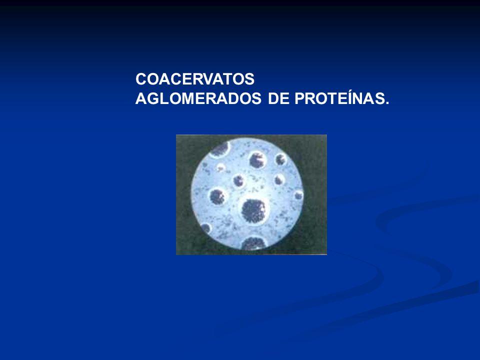 COACERVATOS AGLOMERADOS DE PROTEÍNAS.