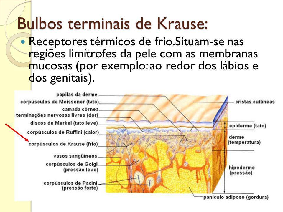 Bulbos terminais de Krause: