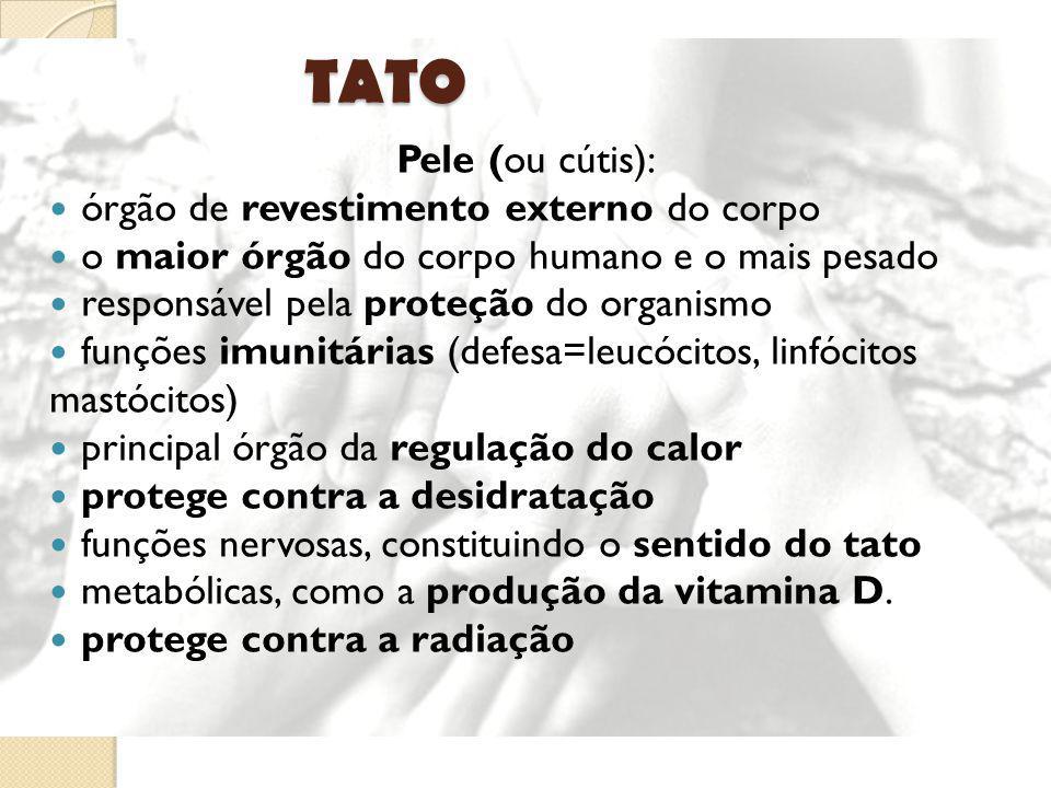 TATO Pele (ou cútis): órgão de revestimento externo do corpo