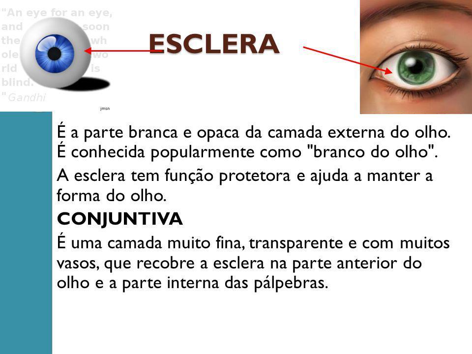 ESCLERA É a parte branca e opaca da camada externa do olho. É conhecida popularmente como branco do olho .