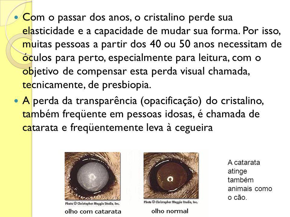 Com o passar dos anos, o cristalino perde sua elasticidade e a capacidade de mudar sua forma. Por isso, muitas pessoas a partir dos 40 ou 50 anos necessitam de óculos para perto, especialmente para leitura, com o objetivo de compensar esta perda visual chamada, tecnicamente, de presbiopia.