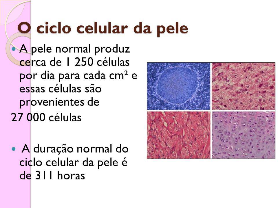 O ciclo celular da pele A pele normal produz cerca de 1 250 células por dia para cada cm² e essas células são provenientes de.