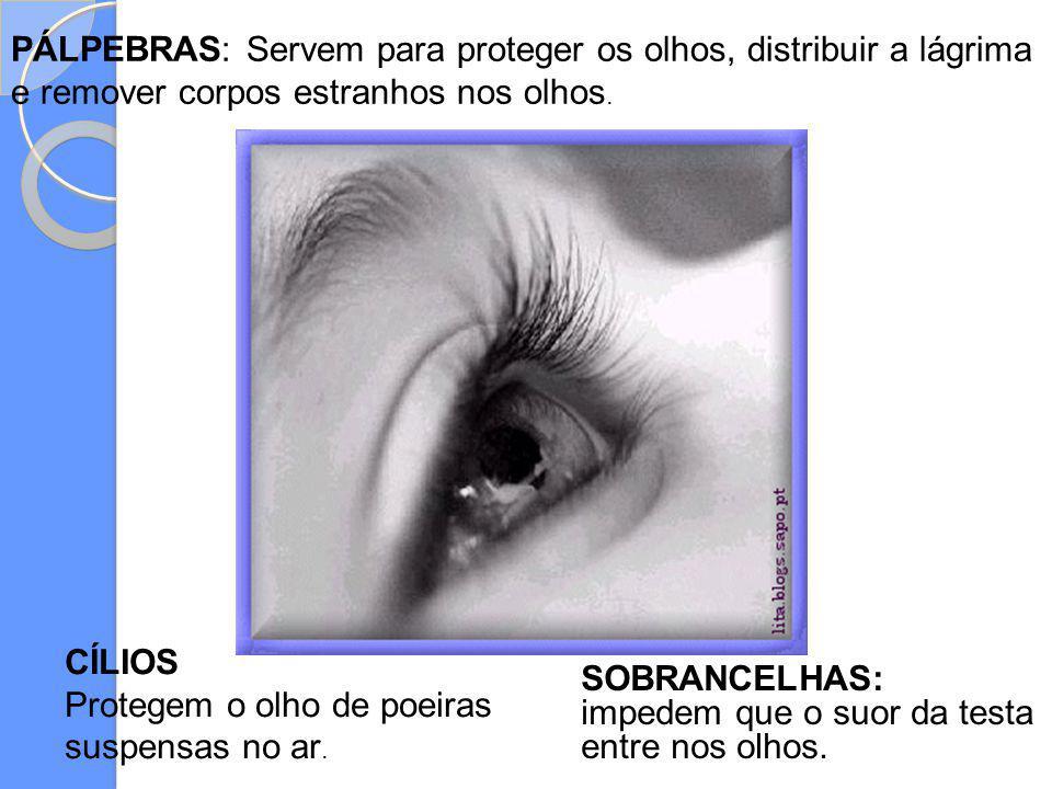 PÁLPEBRAS: Servem para proteger os olhos, distribuir a lágrima e remover corpos estranhos nos olhos.