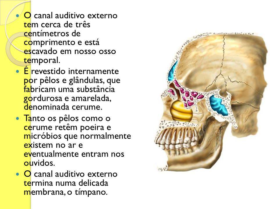 O canal auditivo externo tem cerca de três centímetros de comprimento e está escavado em nosso osso temporal.