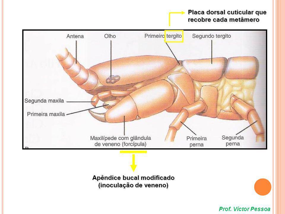 Apêndice bucal modificado (inoculação de veneno)