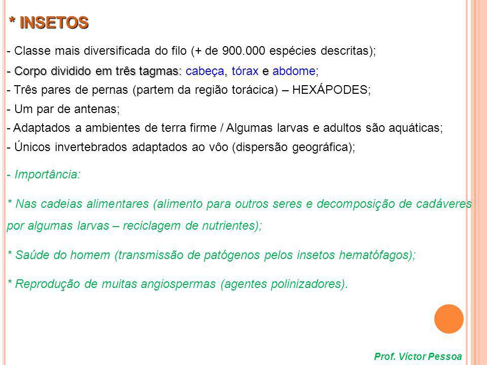 * INSETOS - Classe mais diversificada do filo (+ de 900.000 espécies descritas); - Corpo dividido em três tagmas: cabeça, tórax e abdome;