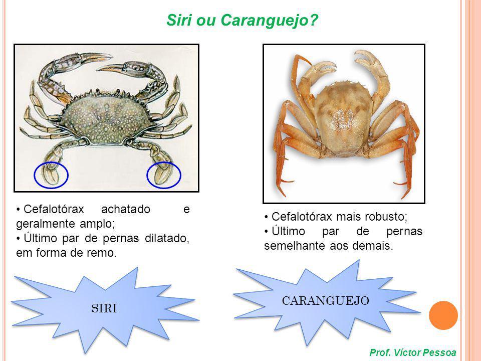Siri ou Caranguejo Cefalotórax achatado e geralmente amplo;