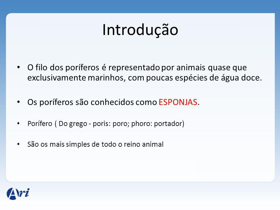 Introdução O filo dos poríferos é representado por animais quase que exclusivamente marinhos, com poucas espécies de água doce.