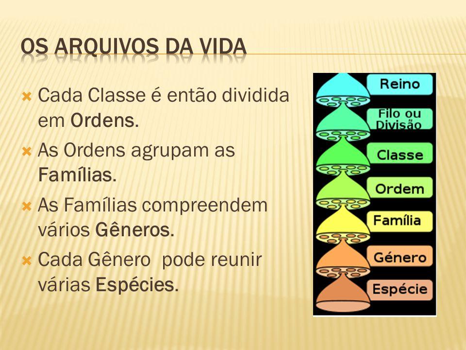 Os arquivos da vida Cada Classe é então dividida em Ordens.