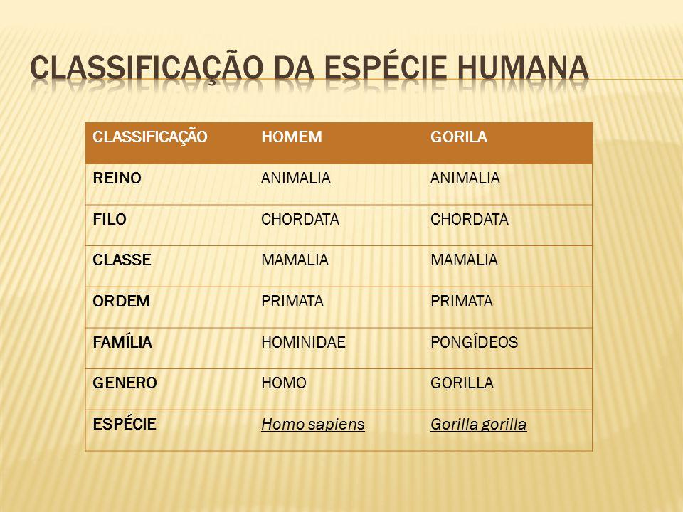 Classificação da espécie humana
