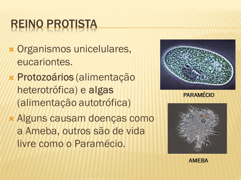 Reino protista Organismos unicelulares, eucariontes.