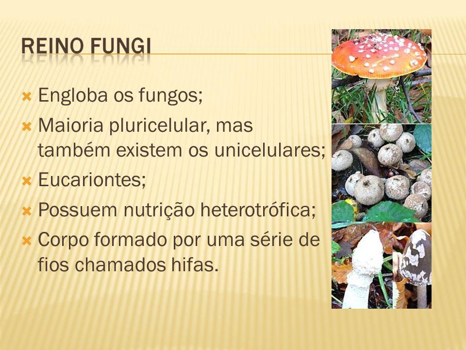 Engloba os fungos; Maioria pluricelular, mas também existem os unicelulares; Eucariontes; Possuem nutrição heterotrófica;