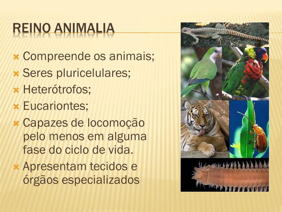 Reino animalia Compreende os animais; Seres pluricelulares;