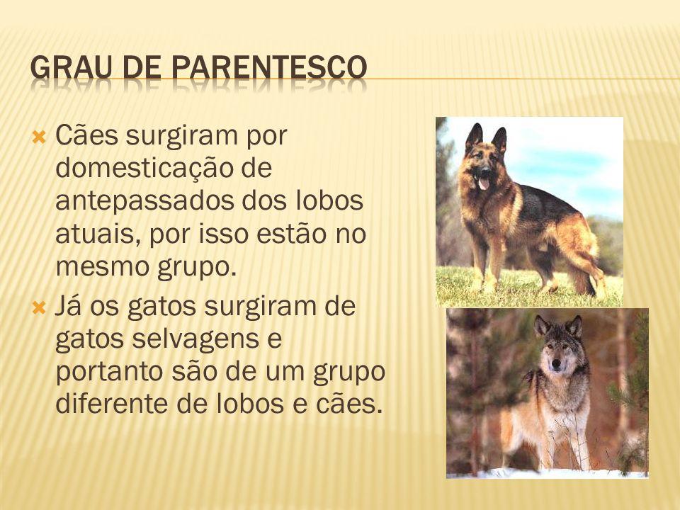 Grau de parentesco Cães surgiram por domesticação de antepassados dos lobos atuais, por isso estão no mesmo grupo.