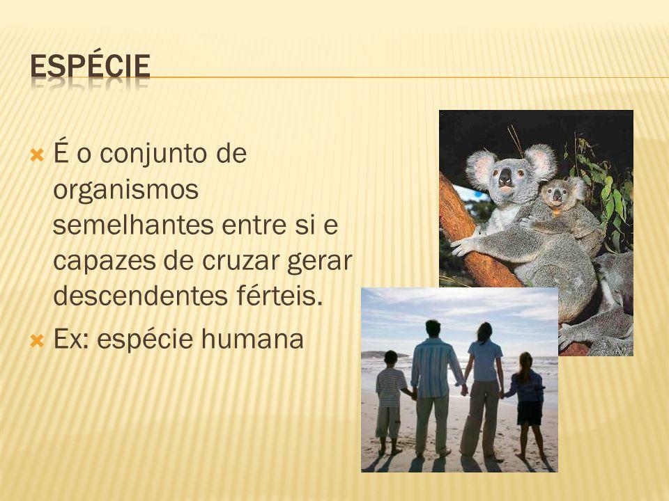 Espécie É o conjunto de organismos semelhantes entre si e capazes de cruzar gerar descendentes férteis.