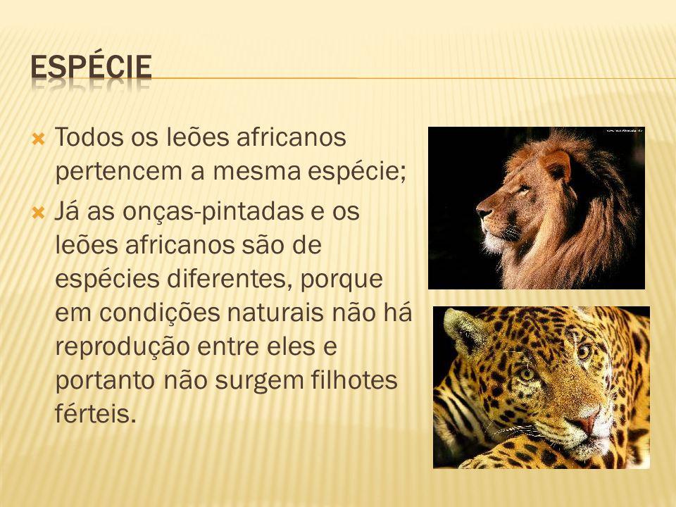 Espécie Todos os leões africanos pertencem a mesma espécie;